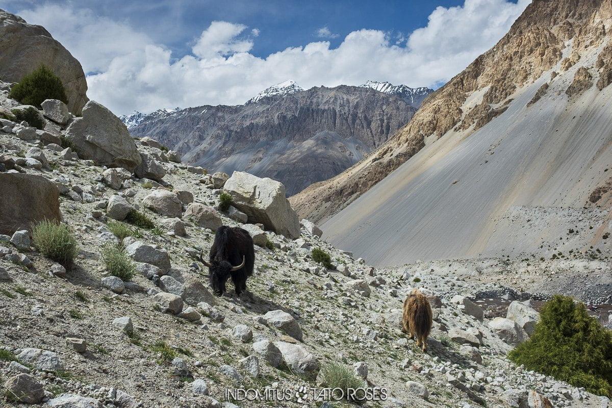 Pakistán 2 0126 Trekking glaciar Kuk e Yaz