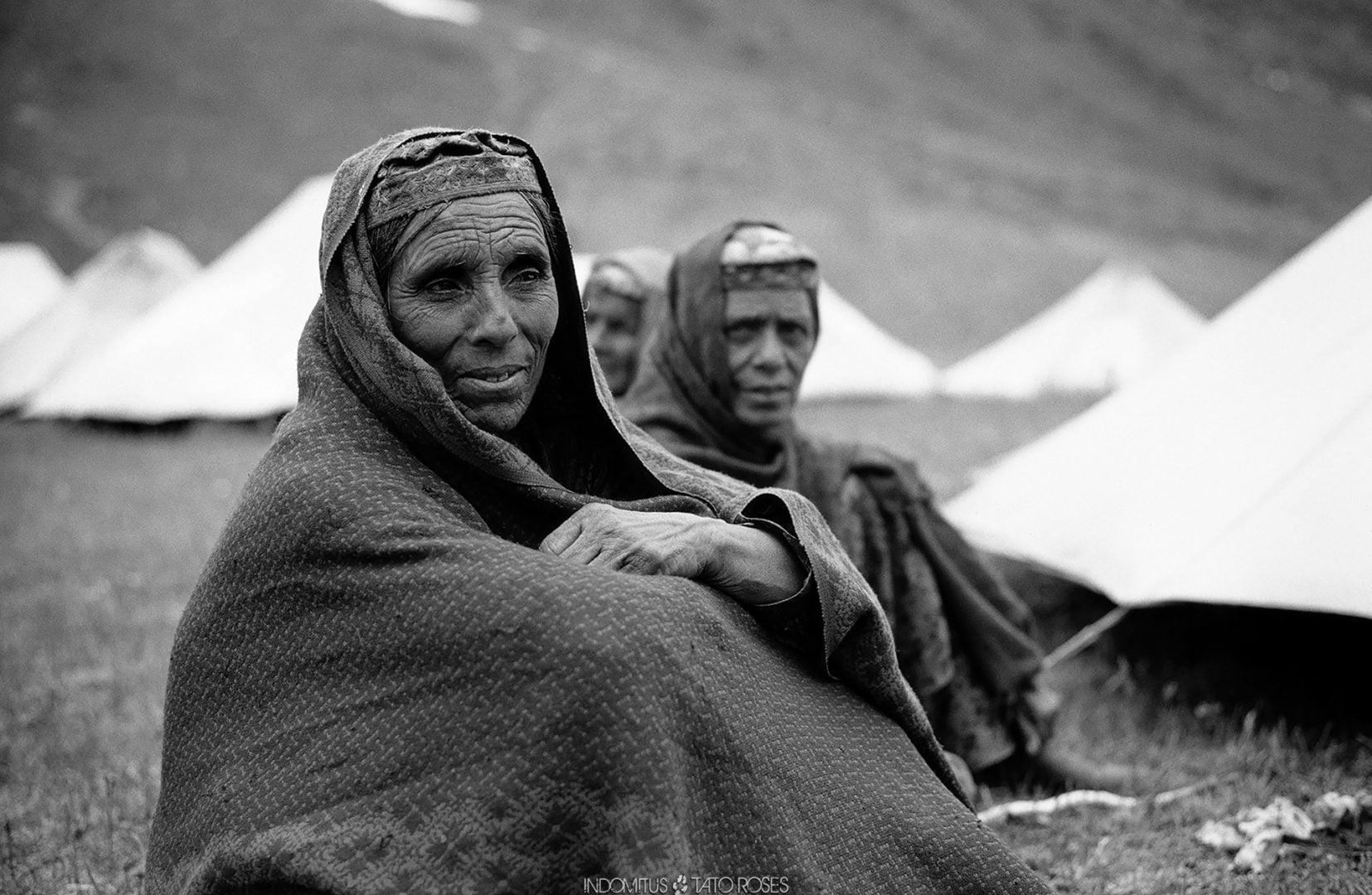 Pakistán Indomitus Tato Rosés 11
