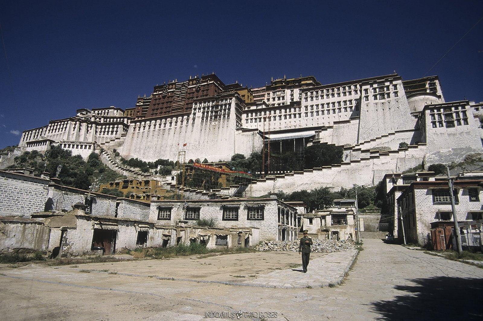 Tíbet Indomitus Tato Rosés 03
