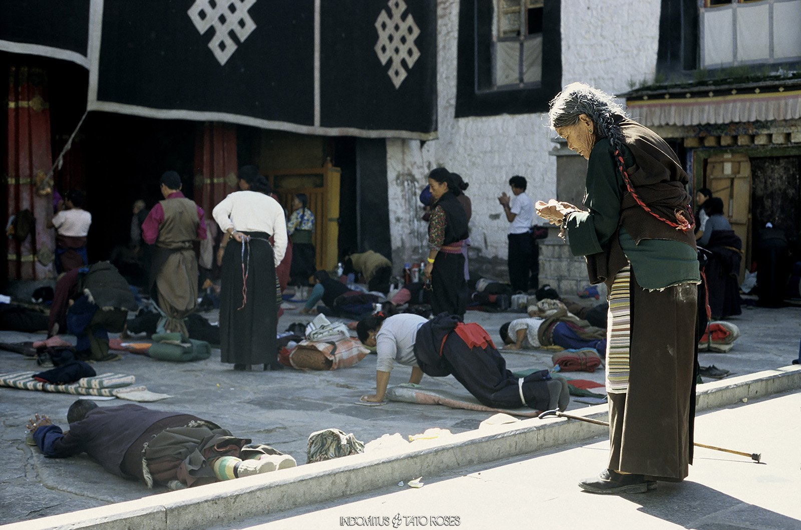 Tíbet Indomitus Tato Rosés 07