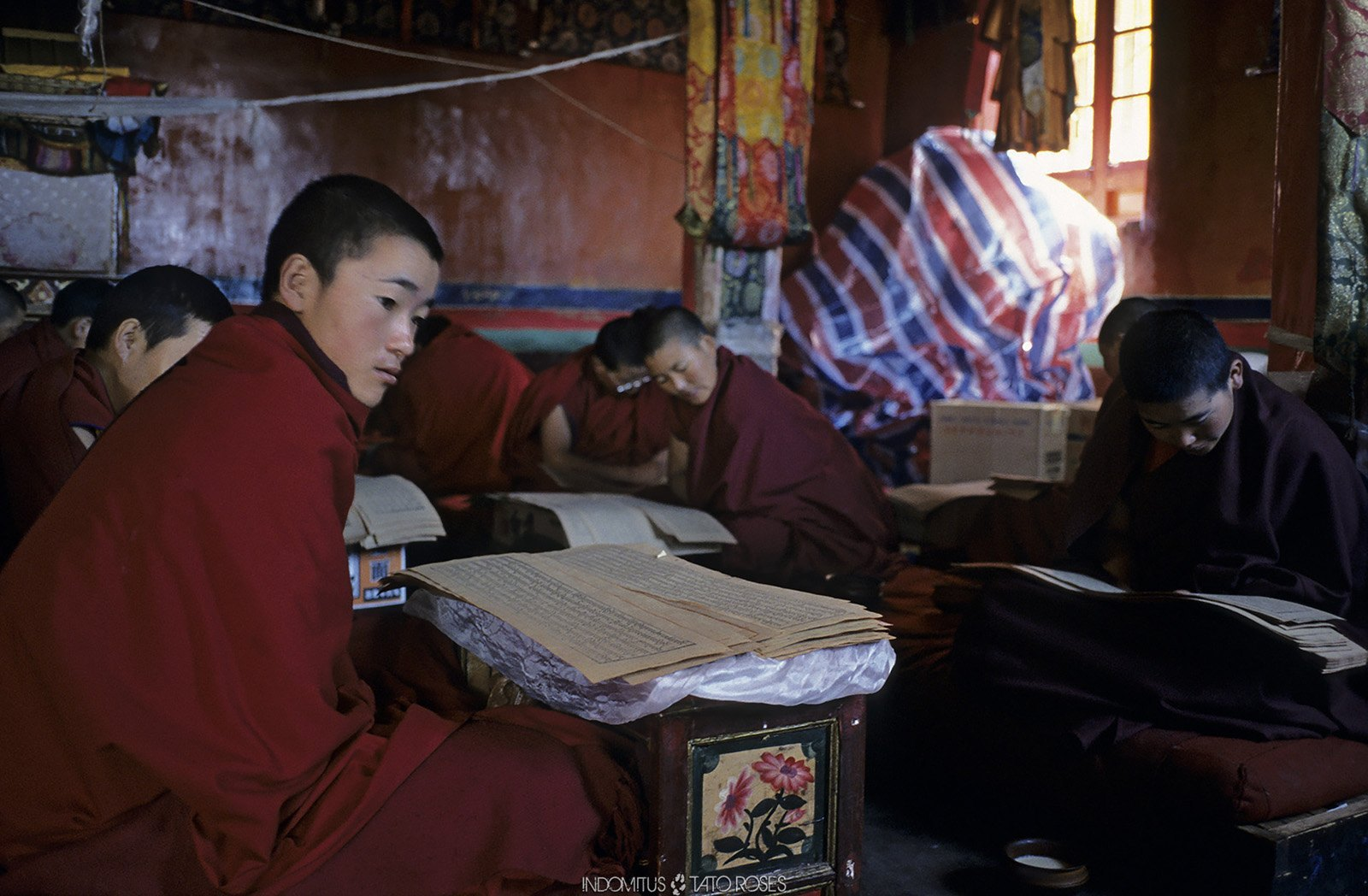 Tíbet  Indomitus Tato Rosés 08