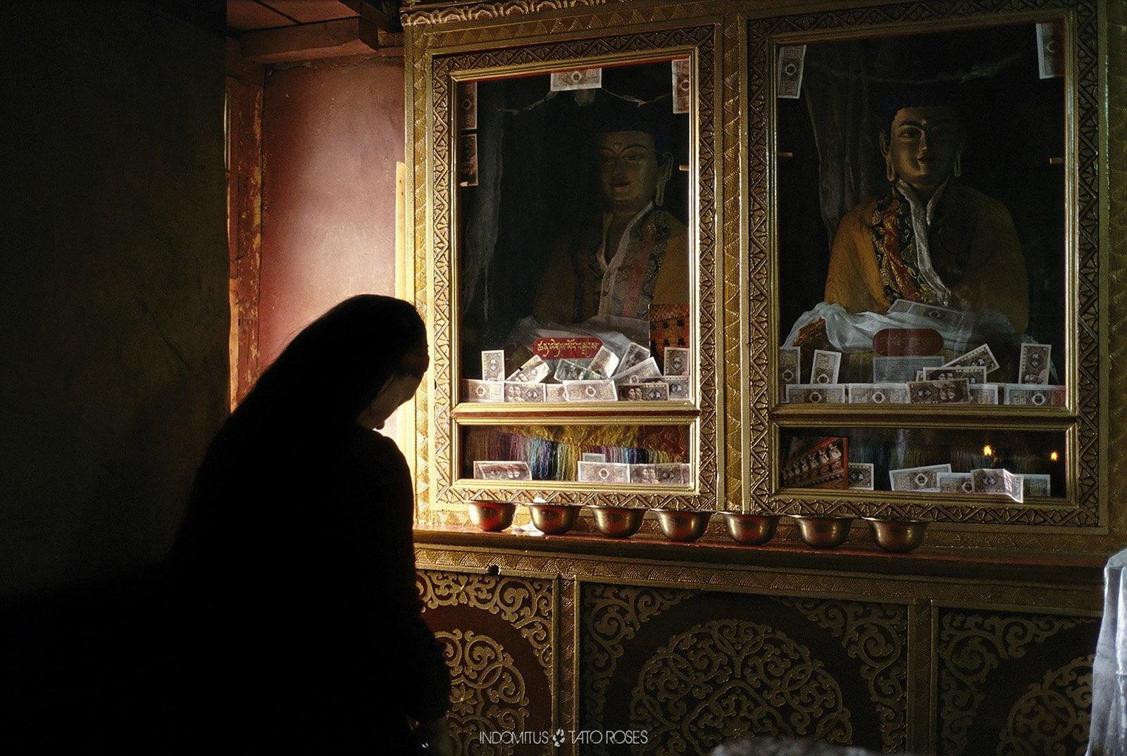 Tíbet Indomitus Tato Rosés 11