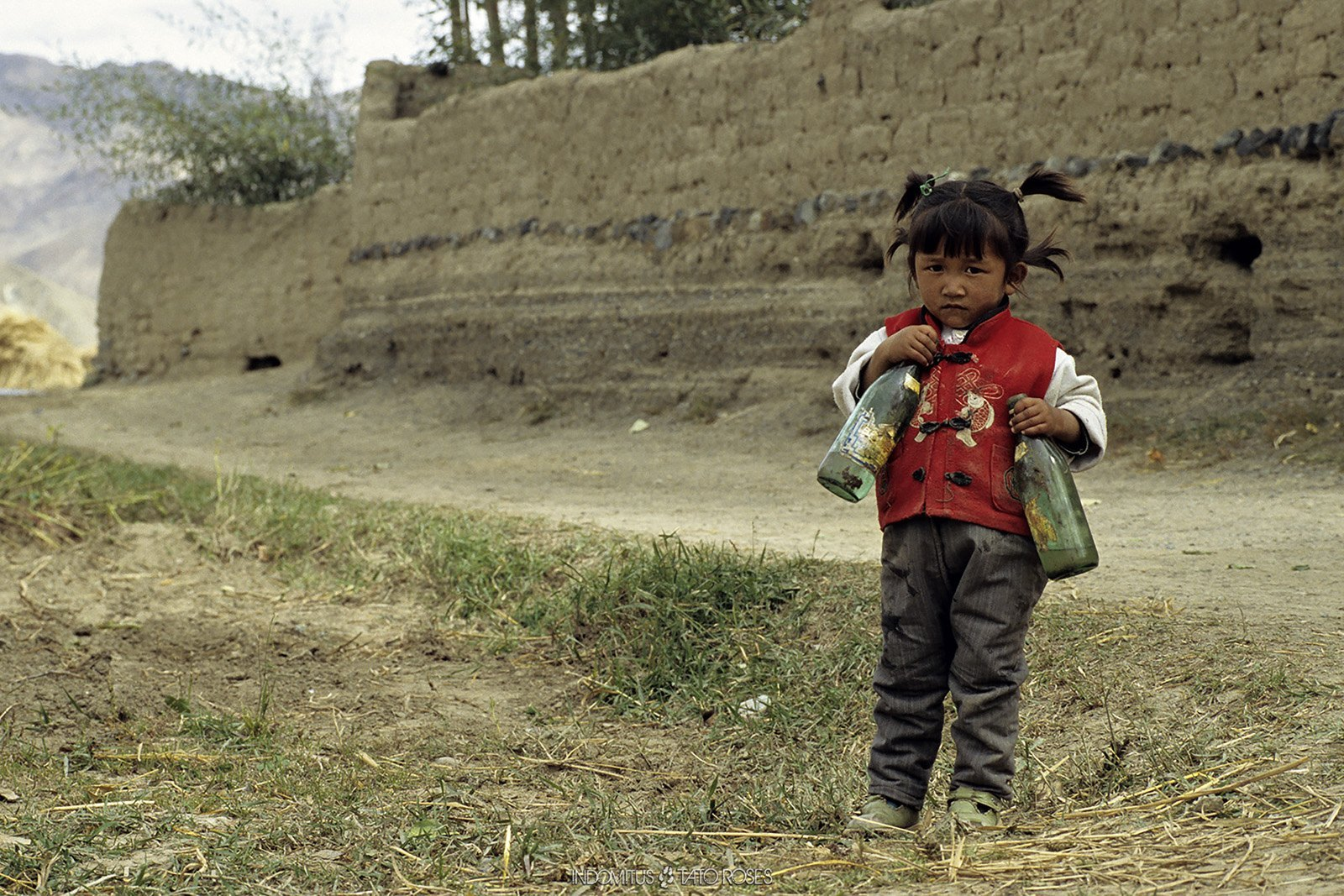 Tíbet Indomitus Tato Rosés 13