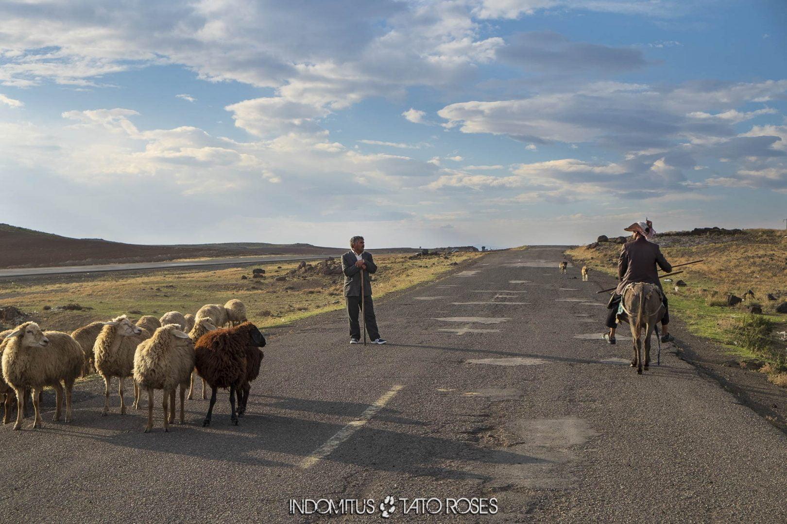 Irán 089b Camino de Razi