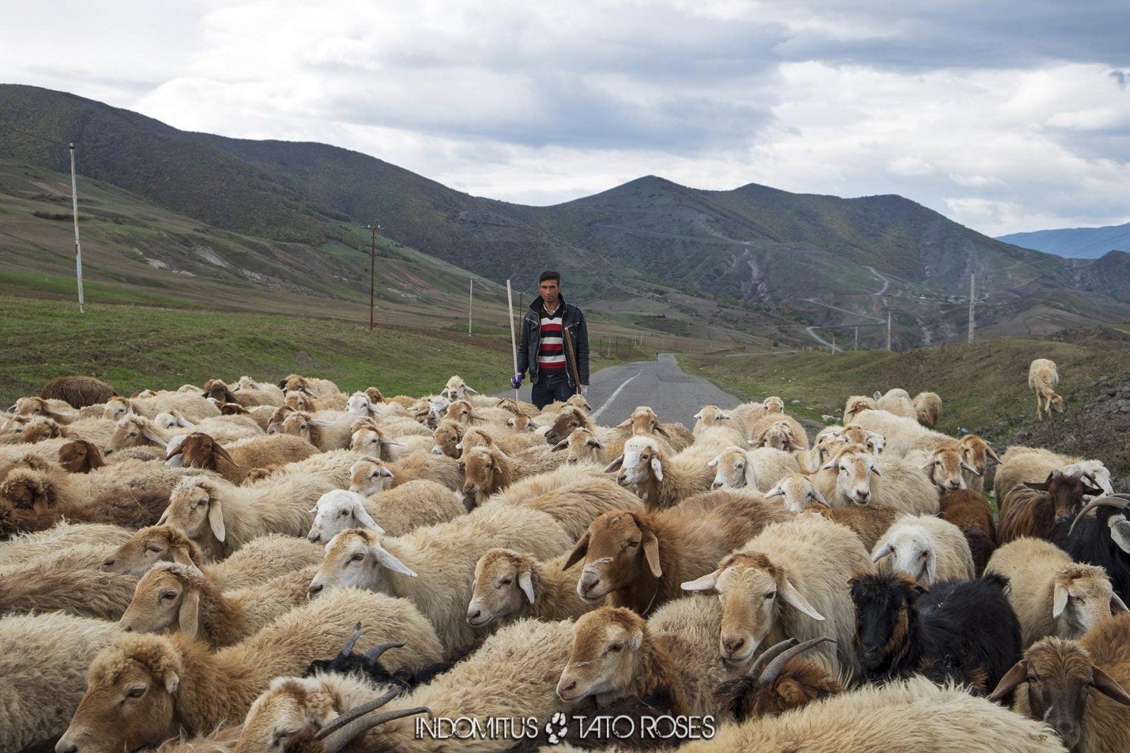 Irán 177 Pastores hacia Kaleibar