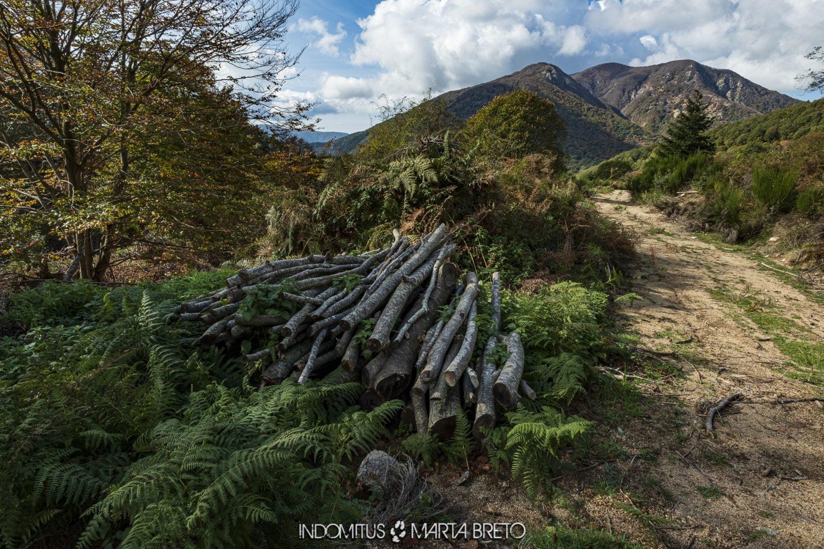 paisaje de montaña y bosque