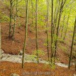 escena de bosque