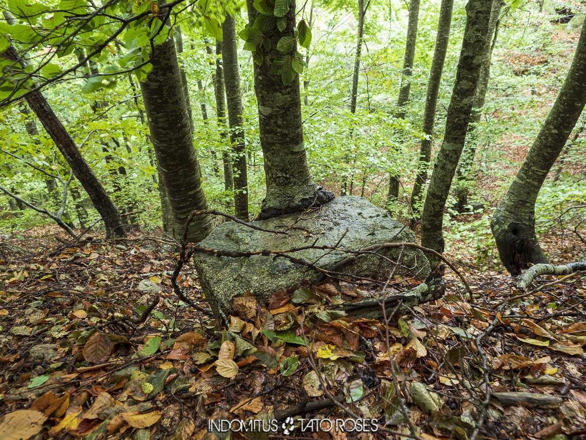 roca y árbol
