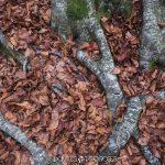 raíces y hojas secas