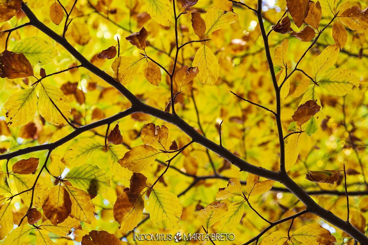 hojas amarillas