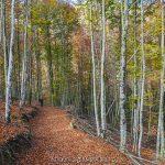 senda por el bosque