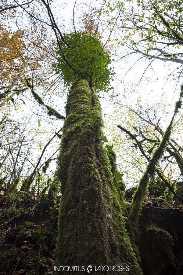 bosque de terciopelo