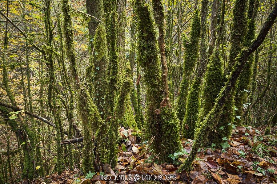 detalle en el bosque