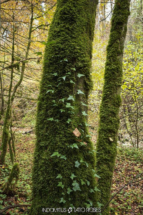detalle del bosque