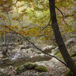 paisaje de bosque