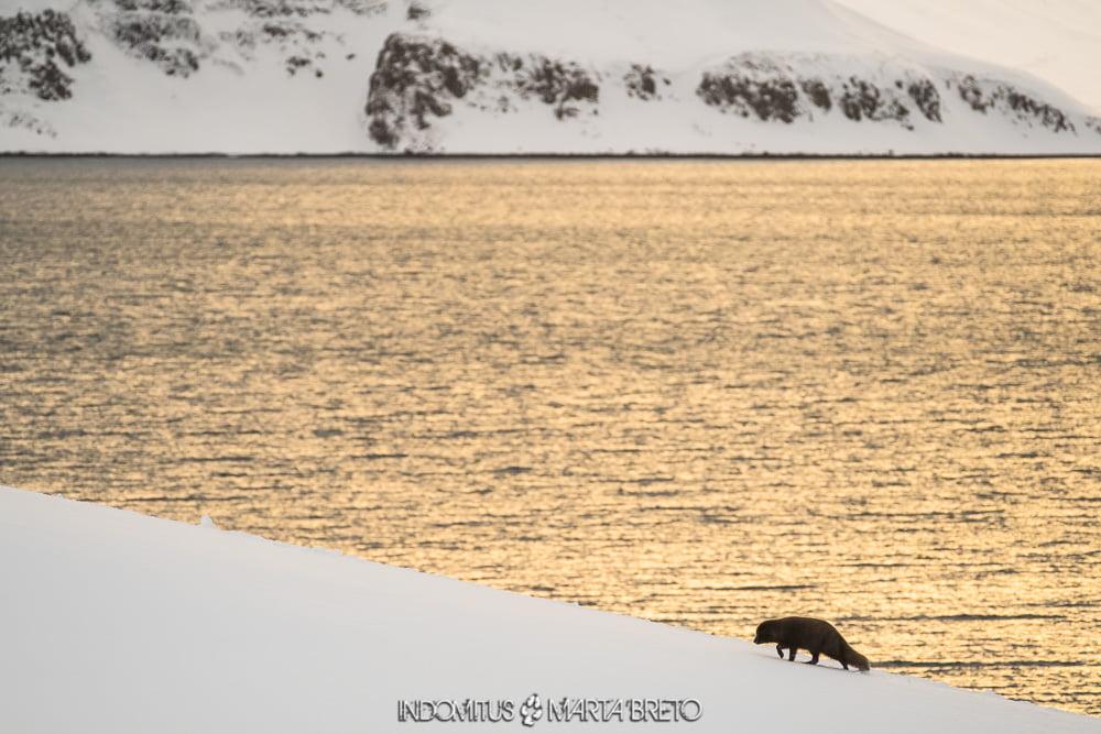 perfil de zorro ártico y paisaje nevado
