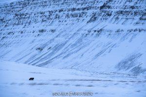 paisaje nevado con zorro ártico