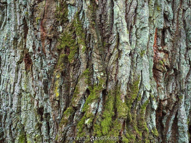 detalle de un árbol