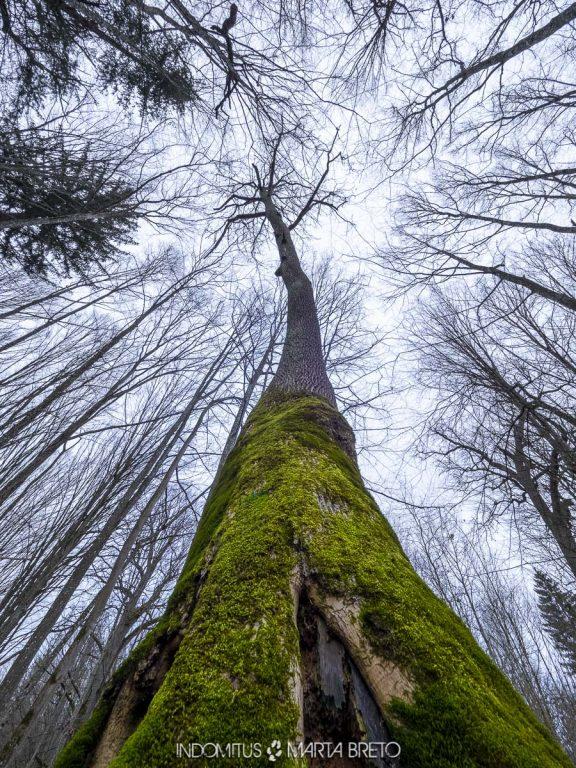 Bosque de Bialowieza