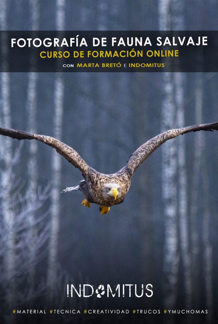 curso de fotografía de fauna salvaje