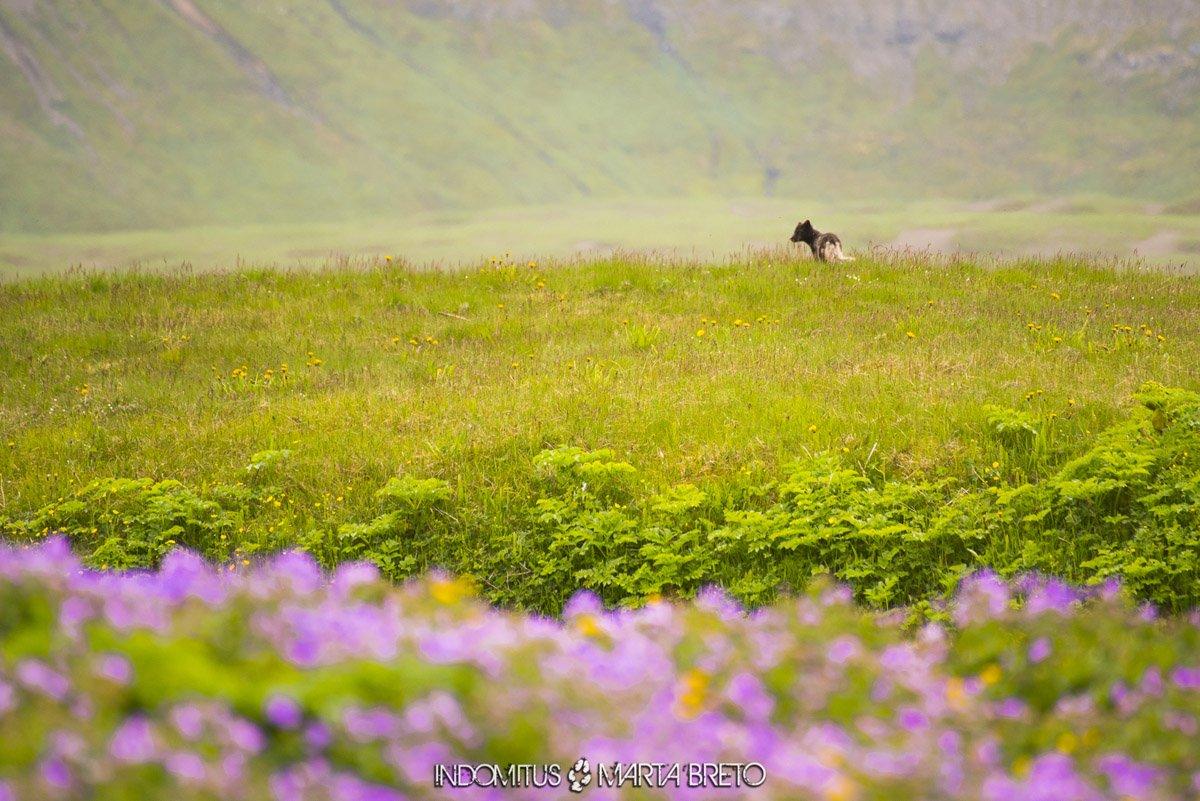 zorro y flores