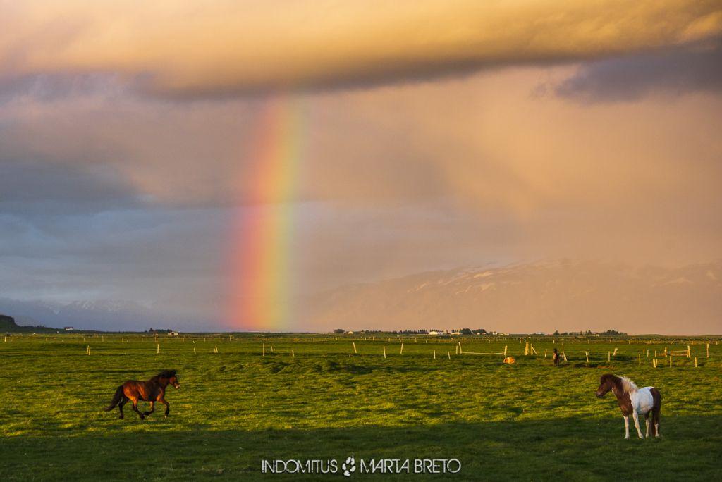 Caballos frente a paisaje con arcoíris