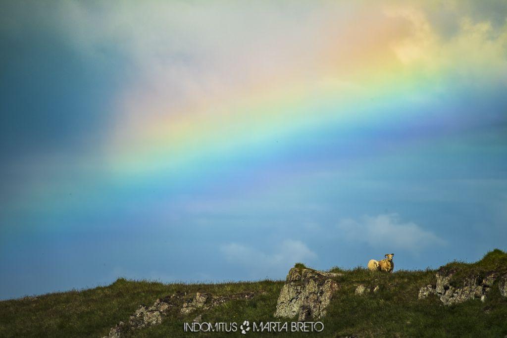 Ovejas y arcoíris
